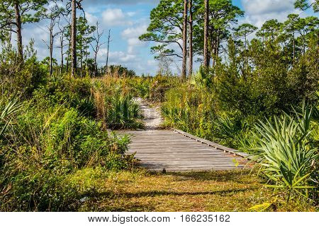 A FOOT BRIDGE OVER A STREAM ON A PATH IN A PALMETTO SCRUB