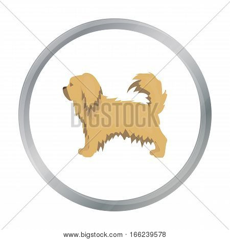 Pekingese vector illustration icon in cartoon design - stock vector