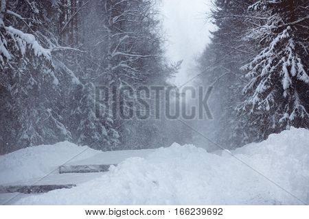 Heavy Snowstorm in park forest landscape with evergreen trees. Low visibility conditions at winter time