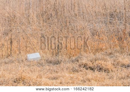Styrofoam ice chest in a field of tall brown grass