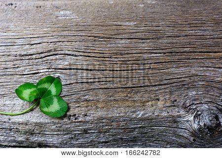 St. Patrick day greeting card with three-leaves clover Irish festival symbol. Shamrock on old wooden background. Copy space.