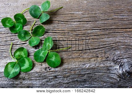 Clover leaves setup on rustic wooden background. St. Patricks day greeting card. Three-leaves shamrock Irish festival symbol. Copy space.