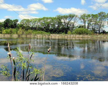 pond in a nature preserve in the summer near Pandora, Ohio
