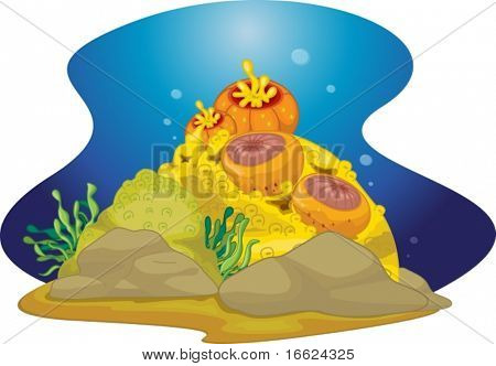 coral reef with detail on white