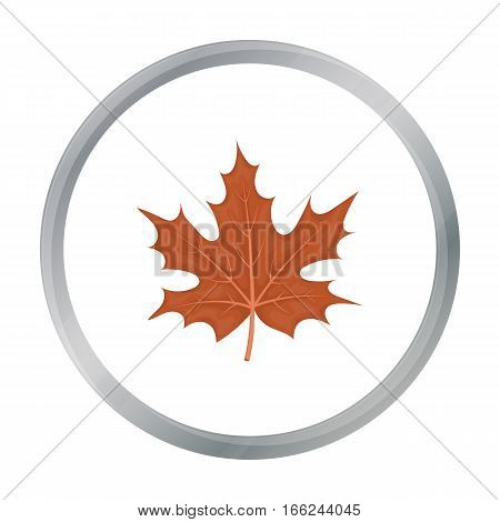 Maple leaf icon in cartoon style isolated on white background. Canadian Thanksgiving Day symbol vector illustration. - stock vector