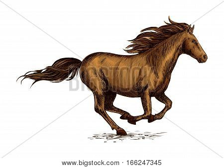 Brown horse running in a field. Sketch of galloping purebred racehorse of arabian breed. Horse racing or equestrian sporting symbol, t-shirt print design