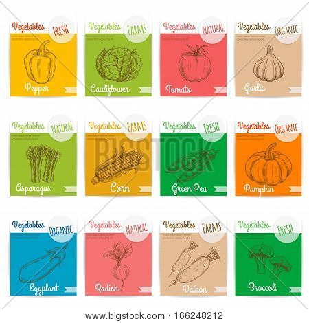 Vegetables vector sketch icons with names text. Card stickers with pepper, cauliflower, tomato and garlic, asparagus, corn, green pea and pumpkin, eggplant and radish, daikon, broccoli. Vegetarian menu board design elements