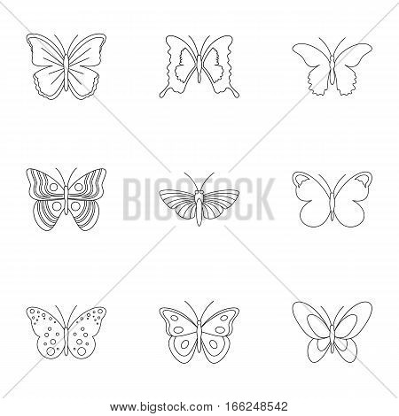 Insects butterflies icons set. Outline illustration of 9 insects butterflies vector icons for web