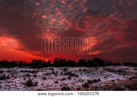Fiery orange colorful sunset . winter forest at sunset.