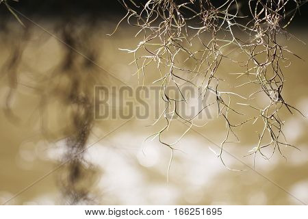 Air root of the plant with blur background