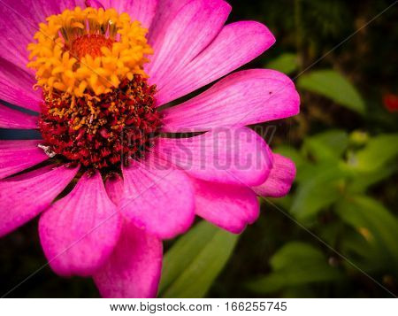 vivacity fresh bright The beauty of the flowers Pink