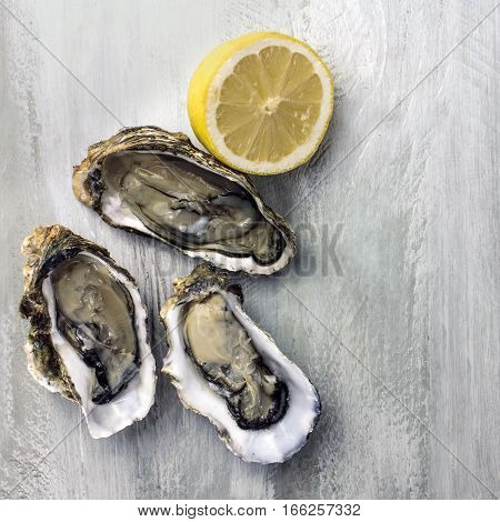 A square photo of freshly opened oysters with a slice of lemon, on a wooden background texture with copyspace