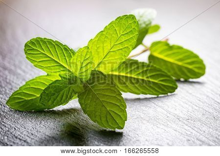 Fresh Twig Of Green Melissa Officinalis Or Mint On Slate Background, Close Up