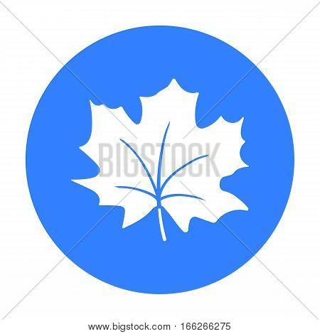Maple Leaf vector illustration icon in blue design