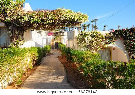 Beautiful flowers bush and footway in tropical garden on Red sea coast resort