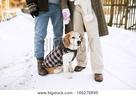 Unrecognizable senior woman and man on a walk with their dog in sunny winter nature.