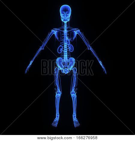 The human body is the entire structure of a human being and comprises a head, neck, trunk (which includes the thorax and abdomen), arms and hands, legs and feet.