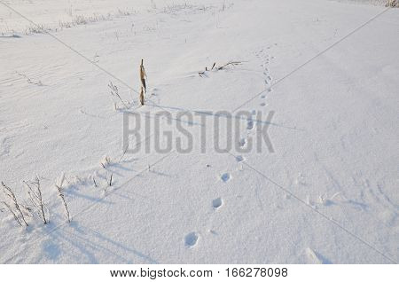 Animal Tracks in Snow Covered Field in Cold Winter