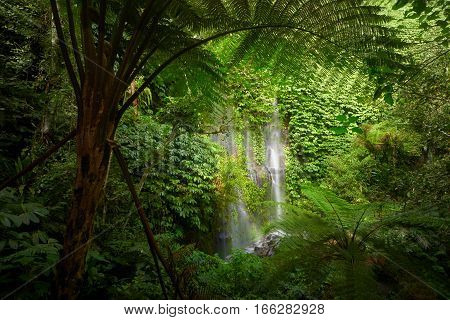 View of forest. Beautuful waterfall in jungle tropic rain forest. Scenic nature background. Waterfall near volcano Rinjani Tetubaty Lombok Indonesia