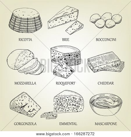 Set of different kinds of graphic cheese. Realistic vector sketch with dairy product. Curds collection used for logo design, recipe book, advertising cheese or restaurant menu.