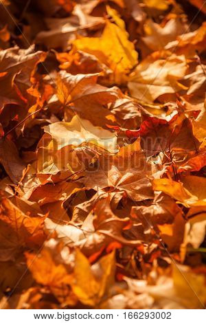 Full frame selective focus on a floor covered with autumnal leaves in the dusky rays of the late afternoon sun.