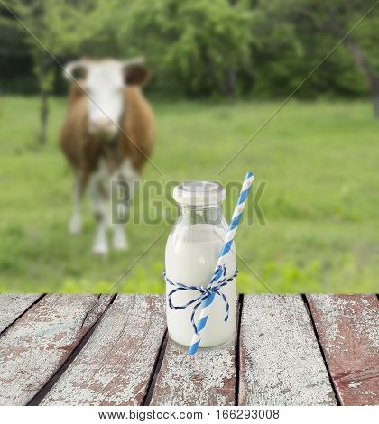 Milk bottle with striped straw. Cow's milk overlooking a meadow with grazing cow. poster