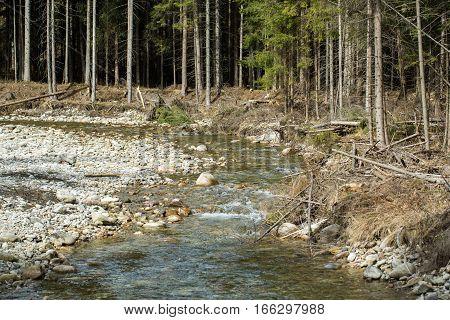 Mountain stream in Chocholwska Valley. Tatra Poland