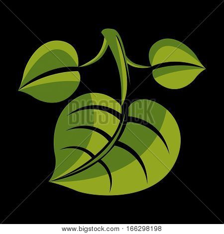 Three Simple Green Vector Leaves Of Deciduous Tree, Stylized Nature Element. Ecology Symbol, Can Be
