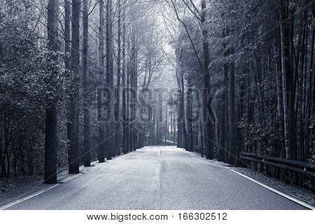 View of the asphalt road in the bamboo forest of Huangshan national park.