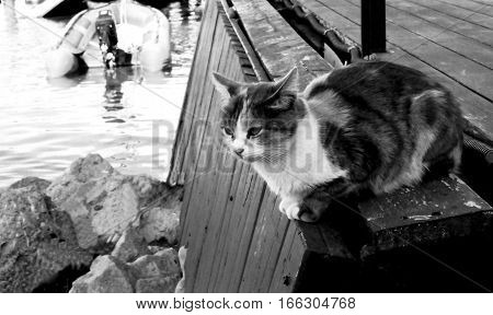 Artistic black and white photo in the style of film photography. Tricolor stray cat lying on wooden sea pier on sunny autumn day. Soft focus, blur
