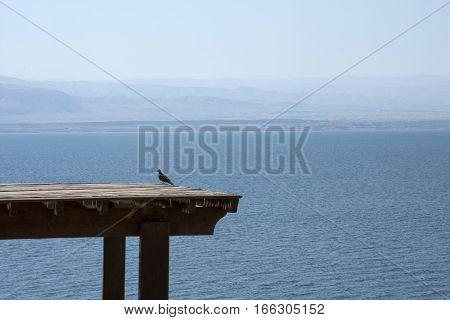 Amman beach in Dead Sea, resort afternoon, tent, pavilion, awning, bird