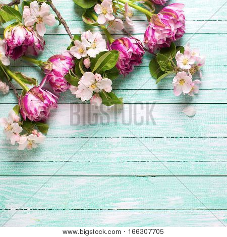 Spring background. Fresh spring tulip flowers and apple tree flowers on turquoise painted wooden background. Selective focus. Place for text. Square image.