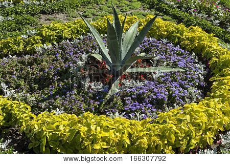 A very beautiful flowerbed located in Kurortny Park Pyatigorsk city,Russia.