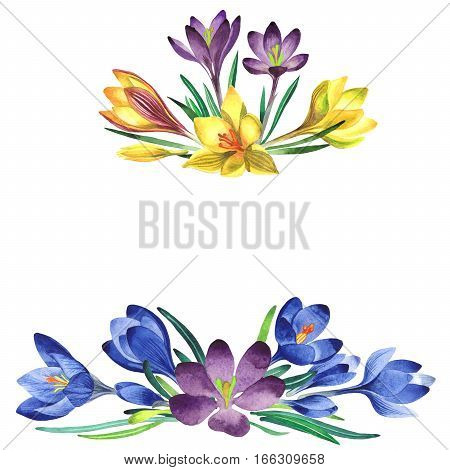 Wildflower crocuses flower frame in a watercolor style isolated. Full name of the plant: crocuses, saffron. Aquarelle wild flower for background, texture, wrapper pattern, frame or border.