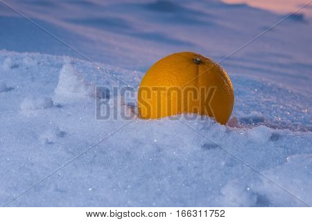Juicy and delicious apple on the snow in the light of the unusual