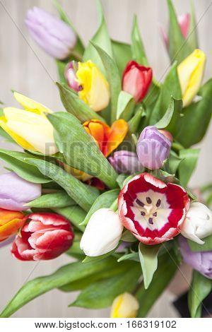 Frische Bunte Tulpen Vor Einem Holzhintergrund