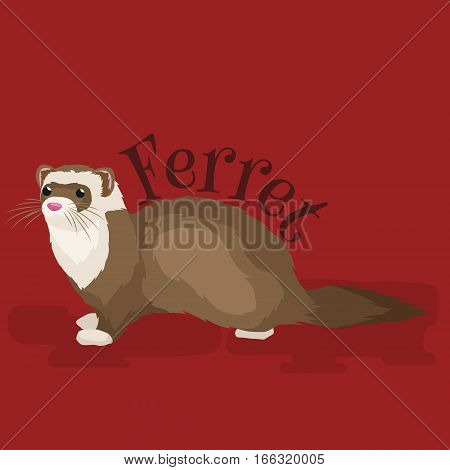 Ferret in full growth lies isolated on red background