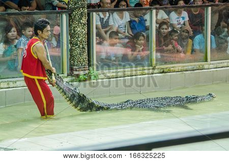 Phuket Thailand - January 14: The show with the man and crocodile show for people and traveller to see at the phuket zoo. on January 142017 at the zoo in Phuket Thailand.
