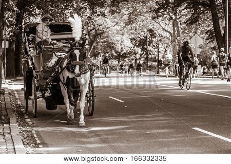 New York, September 17, 2016: A coachman is giving some tourists a ride on his horse drawn carriage around Central Park.