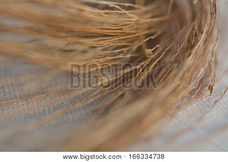 closeup macro dried curve grass of broomstick on white cotton