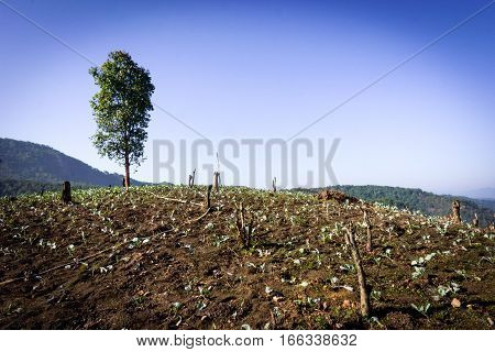 One tree on grassy hill. deforestation. conceptual for life.
