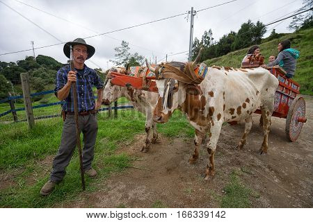 May 22 2016 Florencia Costa Rica: local farmer standing beside a bovine pulled carriage on harvest celebration day
