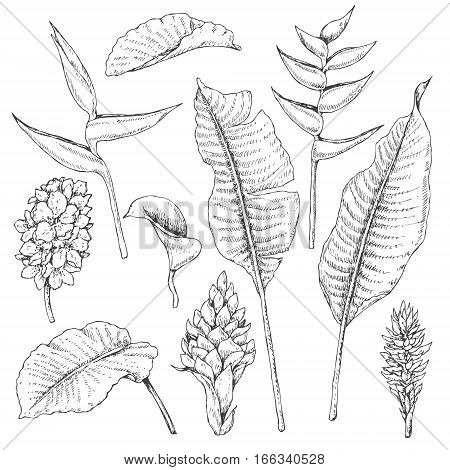 Hand drawn branches and leaves of tropical plants. Tropic flowers sketch.