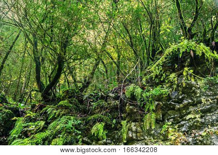 Sunlight in a green subtropical forest on summer day