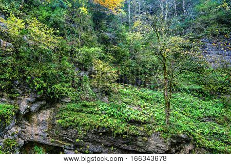 Beautiful landscape with mountain forest thicket and rocks