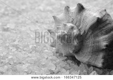 Sea salt crystals close-up. Shell lies on sea salt
