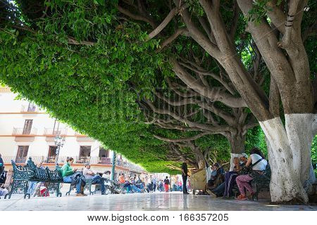 January 19 2016 Guanajuato Mexico: people relaxing under the low hanging trees in the midday sun at Plaza de la Union