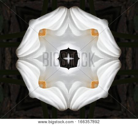 geometric composition of flowers, life allegory death,Flower calla, Zantedeschia aethiopica, commonly known as calla, calla lily,  ring Ethiopia, water lily, cartridge, duck flower or flower vase,