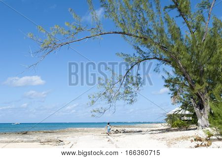 The tree leaning over Seven Mile Beach on Grand Cayman island (Cayman Islands).