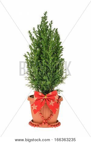 Christmas Tree Isolated On White. Whithout Shadow